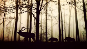 forest-1818690 1280